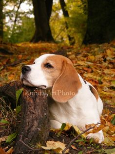 Digital Art Photo Beagle Dog in Autumn Forest JPG via Etsy