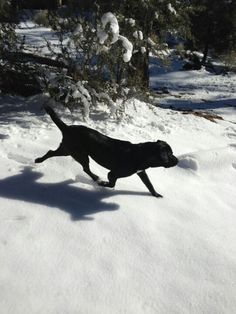 Full stride in the snow