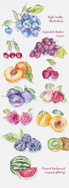 Fruit Watercolor Illustrations by emine on @creativemarket