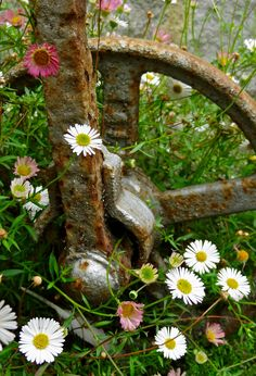 """""""Rust and Flowers"""" by Petura on Flickr ~ Rust and Daisies"""