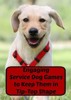 These fun and engaging service dog games will help keep your pooch in tip-top shape while giving you both a great chance to bond. Check them out! *** Continue with the details at the image link. #TrainYourDog