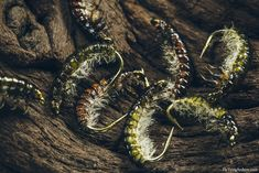 """flytyingarchive: """"Hydropsyche Larva When I first laid my eyes on Oliver Edwards' book Flytyers Masterclass my life changed. It was a real eyeopener to me on what could be achieved with fly tying and..."""