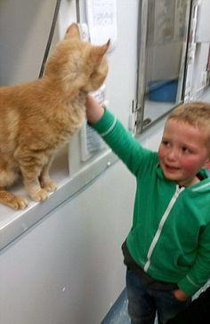 Nunca devemos deixar de procurar os nossos animais desaparecidos. É isso que nos revela a história do gato Phoenix.