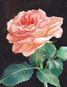 "Daily Paintworks - ""Peach Rose"" - Original Fine Art for Sale - © Charlotte Yealey"