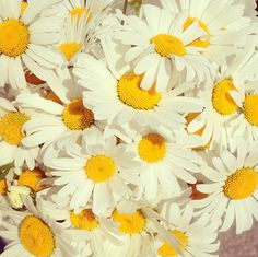 I'm a daisy. Yellow Aesthetic Pastel, Aesthetic Colors, Aesthetic Pictures, White Aesthetic, Flower Power, Happy Beauty, Pushing Daisies, Mellow Yellow, Pretty Flowers