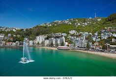 Image result for oriental bay bluewater