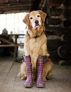 Isn't this doggie cute?