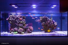 Here is advice from expert reef aquarists for those new to saltwater aquariums on what the secrets are to success with reefkeeping. Cool Fish Tanks, Saltwater Fish Tanks, Tropical Fish Tanks, Saltwater Aquarium, Marine Aquarium Fish, Coral Reef Aquarium, Home Aquarium, Aquarium Design, Aquarium Ideas