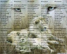 Escrever na foto colocar texto em cima da imagem escreva na sua fotografia efeito transparente cor angulo fontes diversas on-line