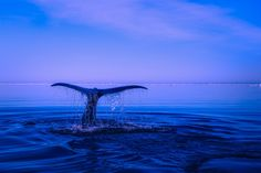 Animal Whale  Ocean Blue Horizon Sea Wallpaper