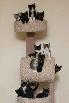 Kittens on a tree!