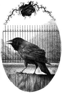 My gothic crow Edgar Allan Poe, Blackbird Singing, Quoth The Raven, Raven Art, Jackdaw, Crows Ravens, Macabre, Magpie, Illustrations