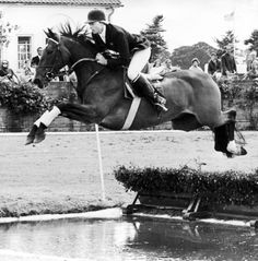 Stroller,  at only 14.1 hands, one of show jumping's greatest.