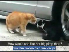 2 cats talking - YouTube