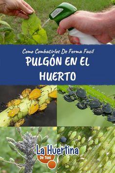Growing Veggies, Green Plants, Garden, Plant Insects, Plants, Garden Fertilizer, Gardening Tips, Natural Garden, Vegetable Garden