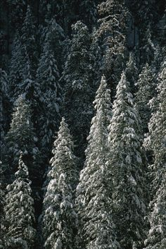 'Snow covers a forest of evergreen trees in Flagstaff, Arizona.' by National Geographic