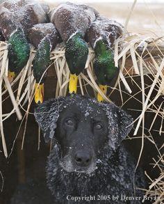 A successful hunt.