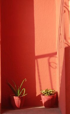 Light and Shade Photo by Nicy V.P -- National Geographic Your Shot
