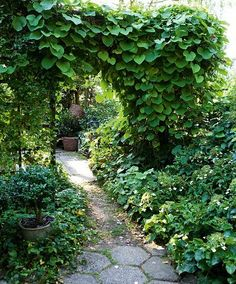 Portal av klatreplanter bl.a. pipeholurt
