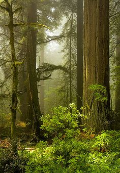 Del Norte Coast Redwoods State Park by g. collier