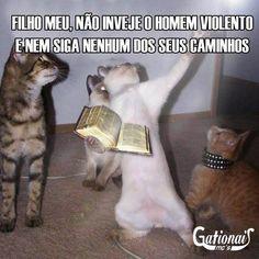 O gato profeta só fala verdades. | 18 gatos que sabem que a vida é diferente da ponte pra cá