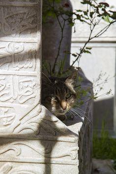 Grave Stone Cat [Gato sobre sepultura de piedra - Estambul]