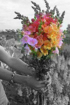 """""""A colheita será mais bonita quando o que se planta são flores """". Rachel Carvalho"""