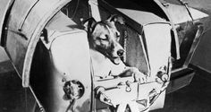 The Sad Story Of Laika, The First Animal To Orbit The Earth - http://all-that-is-interesting.com/laika-space-dog?utm_source=Pinterest&utm_medium=social&utm_campaign=twitter_snap