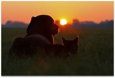 sunset, dog and cat friendship, together