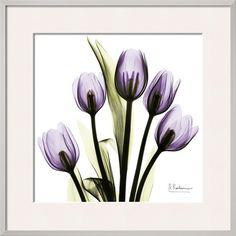 Tulip in Purple Posters by Albert Koetsier - at AllPosters.com.au