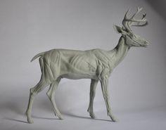 Read More About Deer Anatomy Study, steve lord Anatomy Study, Anatomy Reference, Art Reference, Horse Sculpture, Animal Sculptures, Deer Skeleton, Anatomy Sculpture, Deer Drawing, Digital Sculpting