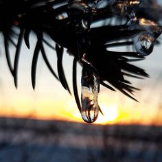 #memories #nature #beautifulcreation #waterdrops #ice #piney #trees #sunset #bscklight sunset pins  #memories #nature #beautifulcreation #waterdrops #ice #piney #trees #sunset #bscklight #naturefotography #horizon #sunshine #colourful #contrast #winter #snow Water Drops, Winter Snow, Bald Eagle, Sunsets, Contrast, Sunshine, Trees, Ice, Memories