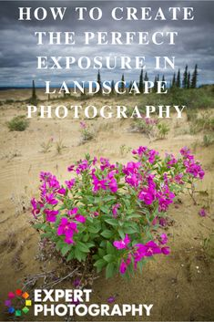 Create Perfect Exposures | Metering Modes in Landscape Photography