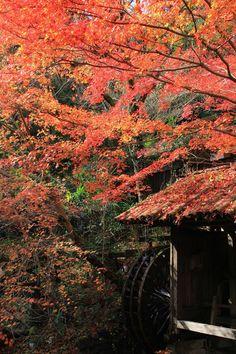 Autumn in Fukuoka, Japan | Yuji Kawashima