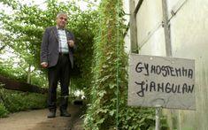 Planta longevităţii şi nemuririi, o variantă a ginsengului, pregătită să fie cultivată în grădinile românilor | adevarul.ro