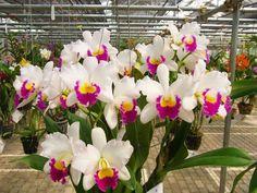 Wondrous Orchids