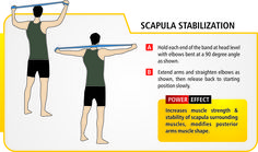 Scapula stabilization. (exercise / resistance bands should be used under professional supervision & guidance).