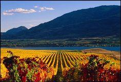 Jackson Triggs Okanagan Estate Winery near Kelowna, BC, Canada