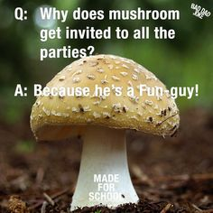 Do you ever talk to your kids about why some people get invited to parties and others don't? Next time you do share this joke to lighten the mood, I'm sure it will get a smile. Bad Dad Jokes, Jokes For Kids, Laughter Therapy, English Writers, How To Grow Taller, Fungi, Dads, Hilarious Stuff, Popular