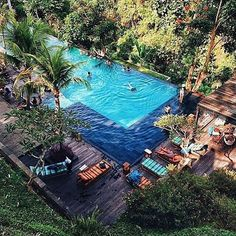 Swim with nature #jungle #fish #junglefish #bali #pool #sunbeds #lounge #water #blue #swimming #friends #experience #explore #adventure #discover #memories #moments #photography #travel #trip #vacation #holiday #summer #sun #winter #warmth #love #life #beautiful #amazing