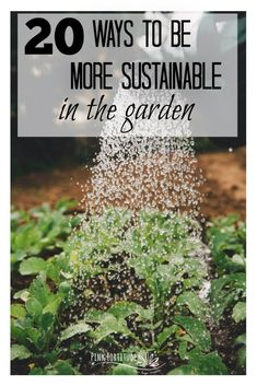 Although a home garden might seem like a very green choice, the Green Living Detective vows to find answers to every question. Is it green to grow veggies at home? Fall Vegetables, Organic Vegetables, Veggies, Sustainable Farming, Sustainability, Sustainable Living, Gardening For Beginners, Gardening Tips, Greenhouse Gardening