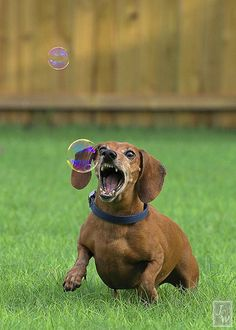 There should be a photo that shows this weiner's expression after that bubble pops!