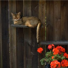 Abyssinian in the garden, posted by Tammie Johnson via imgfave.com