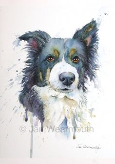 Custom pet portrait, custom dog portrait in Watercolour, pen and ink from your photographs. Original art painting. Border Collie. UK seller