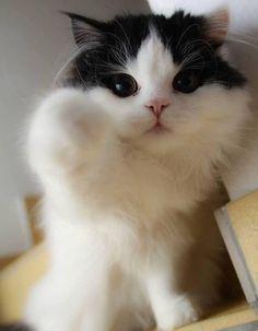 Look at those cheeks!