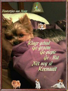 Goeie Nag, Good Night Messages, Goeie More, Afrikaans Quotes, Night Wishes, Good Morning Good Night, Special Quotes, Beautiful Landscapes, Sweet Dreams