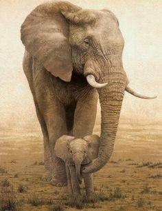 Awww... Elephant mommy having a portrait with baby... <3