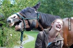 Happy horse photobombs young woman | 10 of the Happiest Looking Horses Ever