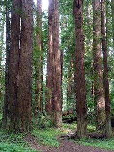 Navarro River Redwoods State Park in Mendocino County, California