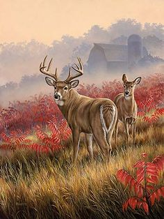 A593457065: Lifting Fog - Whitetail Deer by Rosemary Millette